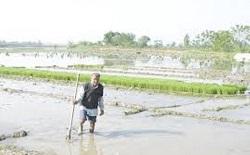 اخطار کم آبی جهاد کشاورزی مازندران به شالیکاران