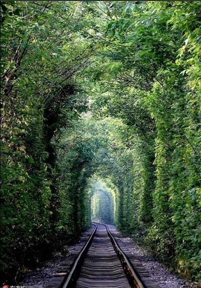 تونل سبز در چین +عکس
