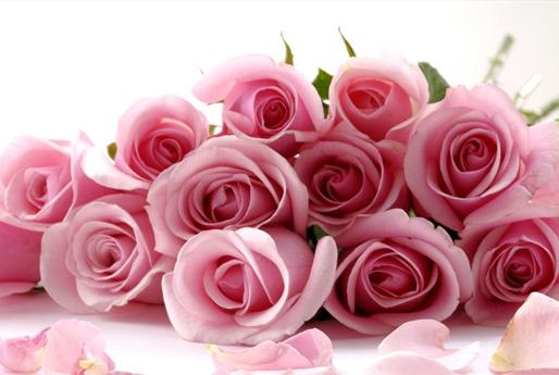 Цветы на обложку картинки 4
