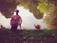 بهترین تصاویر مسابقه عکاسی با آیفون