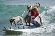 آموزش موج سواری سگها و صاحبانشان در استرالیا + تصاویر