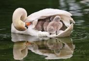 مهر مادری در دنیای پرندگان