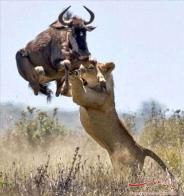 حیات وحش آفریقا عکس(بخش ششم)