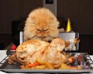 خشمگینانه ترین گربه جهان که تابحال دیده اید