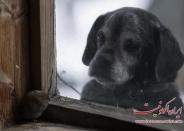 عکس العمل جالب حیوانات در قاب پنجره