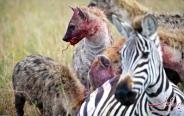 حیات وحش آفریقا عکس (بخش دوم)
