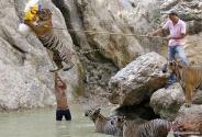 سفری تصویری و نفسگیر به معبد ببرها در تایلند