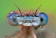 نمايي بسيار نزديک و ديدني از حشرات باران خورده!