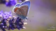 دنیای پروانه های وحشی + تصاویر