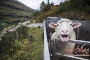 تصاویری جذاب و دیدنی از دنیای حیوانات