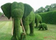 تصاویری زیبا از تلفیق خلاقیت و هنر باغبانی