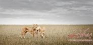 حیات وحش آفریقا عکس(بخش هفتم)