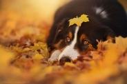 دوست باوفاي انسان در پاییز برگ ریز