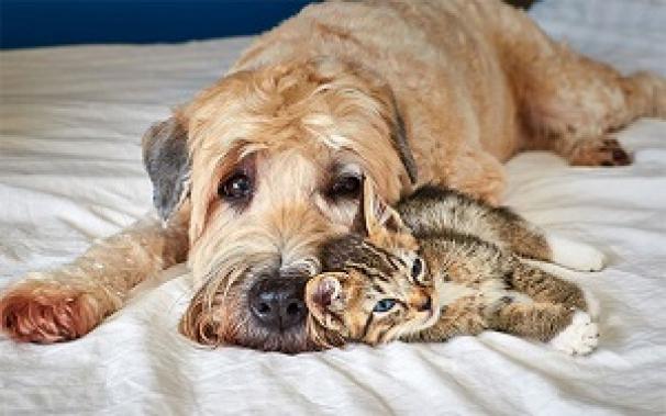 سگ و گربه؛ دشمنان قدیمی و دوستان صمیمی امروز
