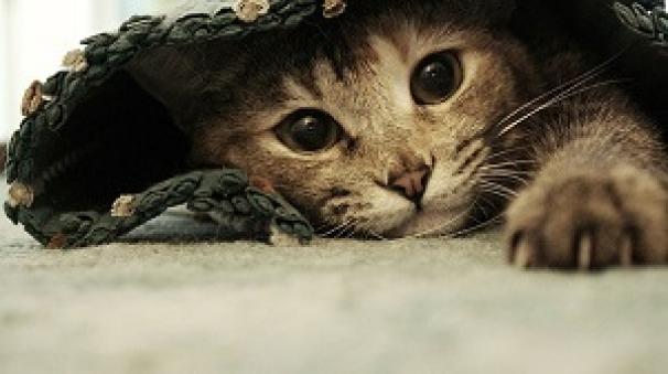 گربه های لوس و ملوس در خانه ها