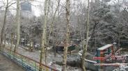 نخستین برف بهمن ماه در پارک ساعی + تصاویر
