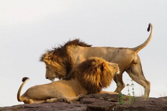 فیلم : حیات وحش آفریقا طبیعت و موفقیت