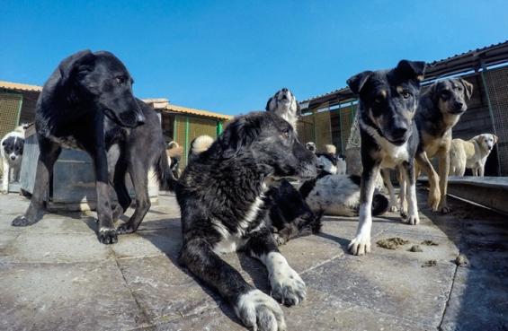 فیلم : وفا خانه ای برای بیش از ۱۰۰۰ سگ بی سرپرست و سالمند