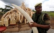 تصاویر آتش زدن عاج های غیر قانونی در کنیا
