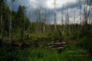 آخرین جنگل دوران باستانی اروپا