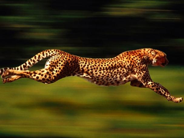 فیلم: چرا شتاب یوزپلنگ از پورشه بیشتر است؟