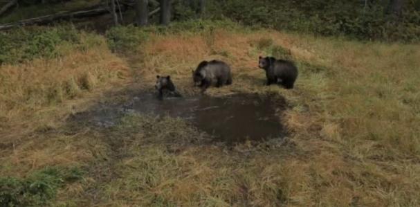 فیلم بسیار جالب از حمام  کردن و آبتنی کردن خرس ها