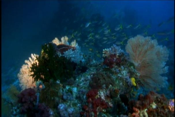 فیلم : مرجان ها بزرگترین موجودات زنده دنیا در زیر آب