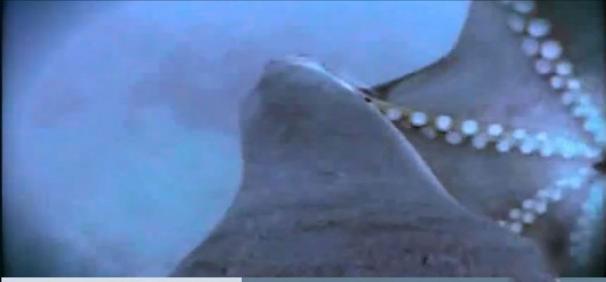 فیلم : نبرد شیر دریایی با هشت پا