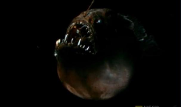 فیلم : قلابچهماهی قاتلی عجیب در اعماق اقیانوس