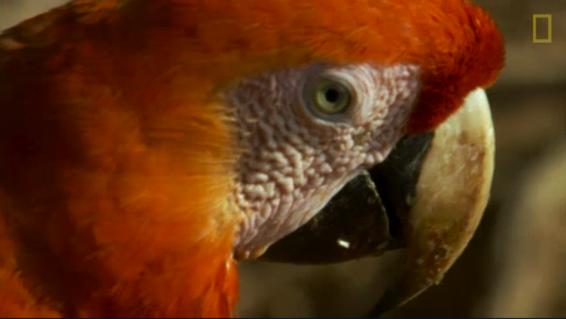 فیلم : چرا طوطی ها خاک رس می خورند