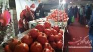تصاویر : افتتاح نمایشگاه انار و میوه های قرآنی