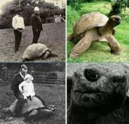 عکس : پیرترین لاک پشت جهان