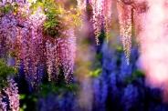 ده گیاه سمی و خطرناک که در خانه پرورش میدهیم