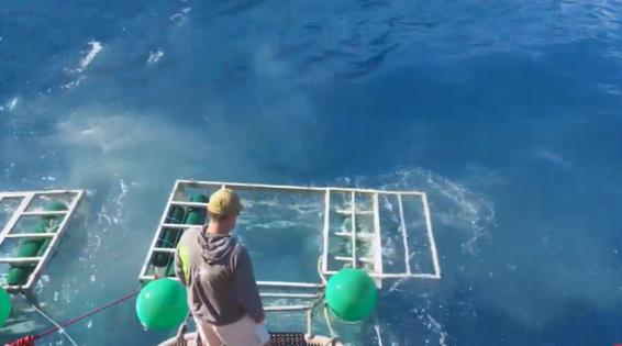 فیلم : نجات معجزه آسای غواص از حمله کوسه