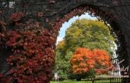 تصاویر : دنیای رنگارنگ پاییز