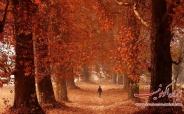 تصویری زیبا از پاییز