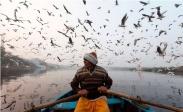 تک عکس : قایقران هندی در میان پرواز مرغان دریایی