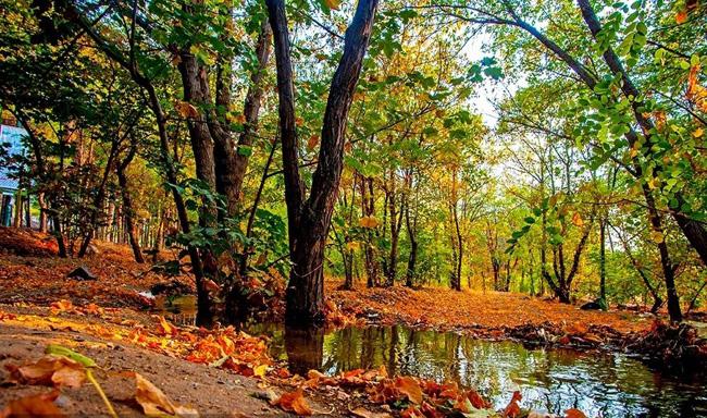 جایگزینی پساب با آب خام برای آبیاری پارک های جنگلی