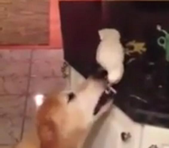فیلم : غذا دادن طوطی به سگ
