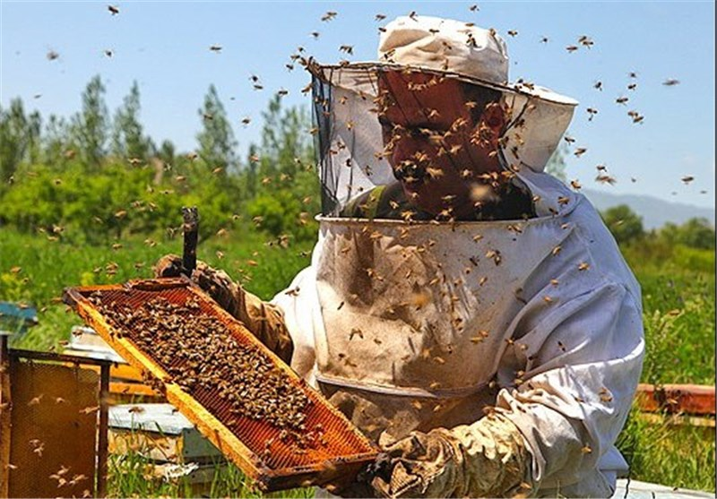 مشکلات بازار عسل ایران و زنبورداران
