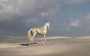 زیباترین اسب جهان (+عکس)