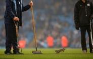 تصاویر: سنجابی که استادیوم منچسترسیتی را به هم ریخت