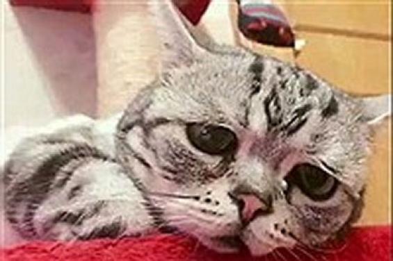 نجات بچه گربه بعد از ناله های مادرانه (فیلم)