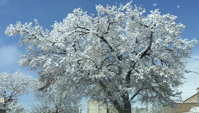 برف آذربایجانشرقی را سفید پوشش کرد