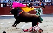 تک عکس : گاو بازی در اسپانیا