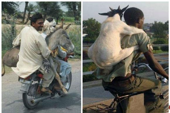 تصاویری از شیوههای خندهدار و شگفتانگیز باربری در دنیا