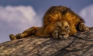 عکس | نگاه نافذ یک شیر در عکس روز نشنال جئوگرافیک