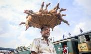 تک عکس : حمل ده ها اردک با سبد در هند