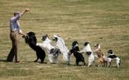 تک عکس : نمایش سگ ها در آلمان