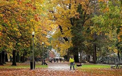 زیباییهای فصل هزار رنگ پاییز